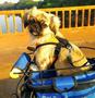 Cadeirinha de Bike Para Dog Altmayer